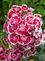 Imprimer le dessin en couleurs : Fleurs, numéro 118050