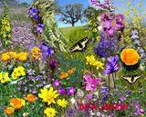 Imprimer le dessin en couleurs : Fleurs, numéro 118051