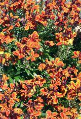 Imprimer le dessin en couleurs : Fleurs, numéro 118054