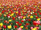 Imprimer le dessin en couleurs : Fleurs, numéro 118058