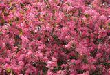 Imprimer le dessin en couleurs : Fleurs, numéro 118060