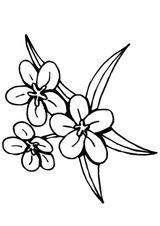 Imprimer le coloriage : Fleurs, numéro 129173