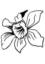 Imprimer le coloriage : Fleurs, numéro 129190