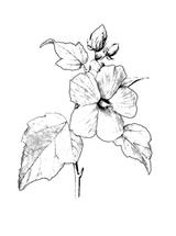 Imprimer le coloriage : Fleurs, numéro 129195