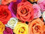 Imprimer le dessin en couleurs : Fleurs, numéro 22058