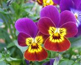 Imprimer le dessin en couleurs : Fleurs, numéro 246781