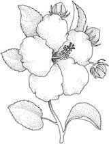 Imprimer le coloriage : Fleurs, numéro 3132