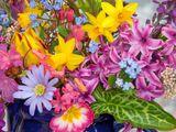 Imprimer le dessin en couleurs : Fleurs, numéro 493097