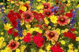 Imprimer le dessin en couleurs : Fleurs, numéro 580422
