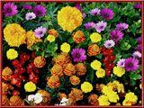 Imprimer le dessin en couleurs : Fleurs, numéro 70902