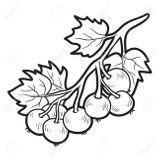 Imprimer le coloriage : Fruits, numéro 17988fca