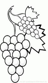 Imprimer le dessin en couleurs : Fruits, numéro 476734