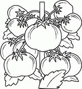 Imprimer le dessin en couleurs : Fruits, numéro 476743