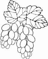 Imprimer le dessin en couleurs : Fruits, numéro 476759