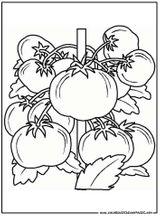 Imprimer le coloriage : Légumes, numéro 113999