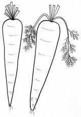 Imprimer le coloriage : Légumes, numéro 130181