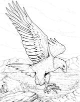 Imprimer le coloriage : Mangas, numéro 13af9998