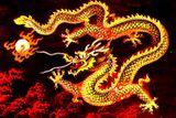 Imprimer le dessin en couleurs : Dragon, numéro 116773